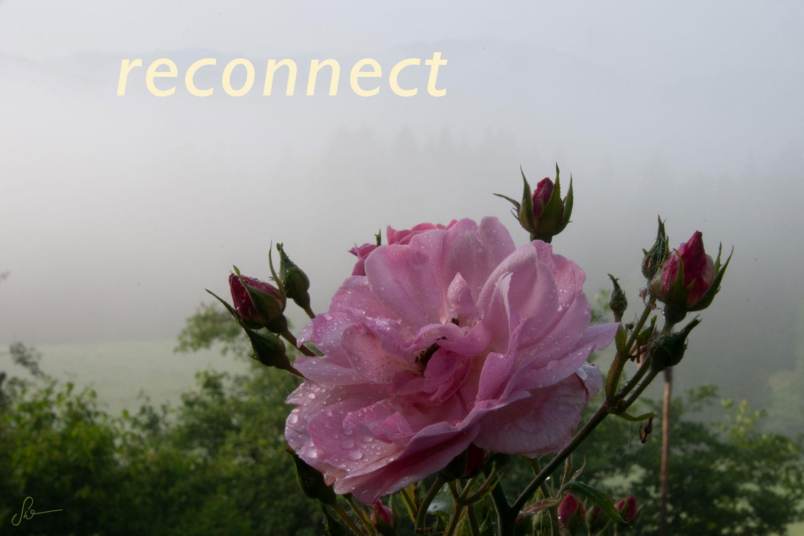 Rose-Nantes_3710-14A_sw_reconnect-v2