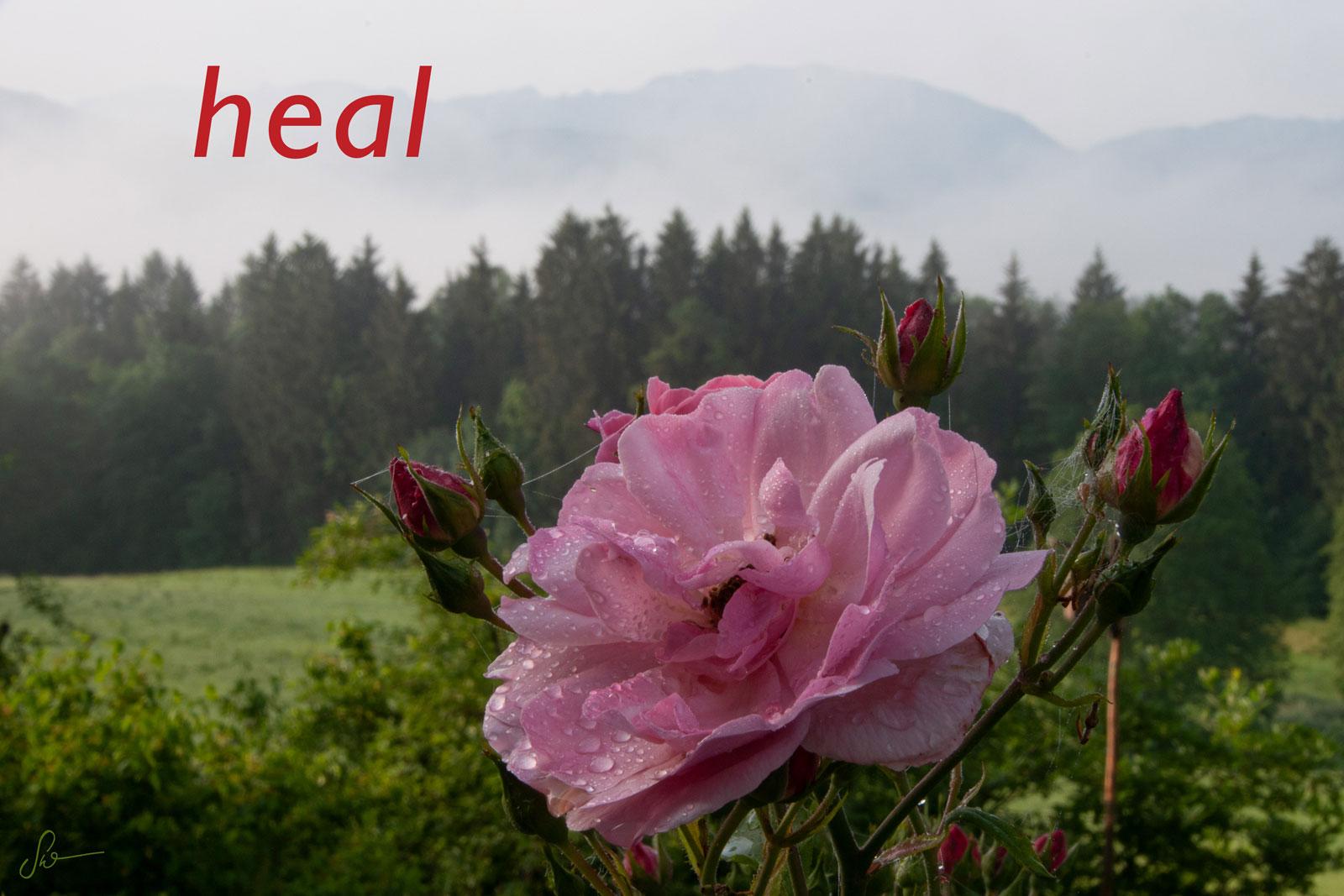 Rose-Nantes_3710-14B_sw_heal-v2